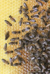 animal-world-apiary-beehive-461099