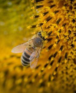bee-beehive-blur-211467